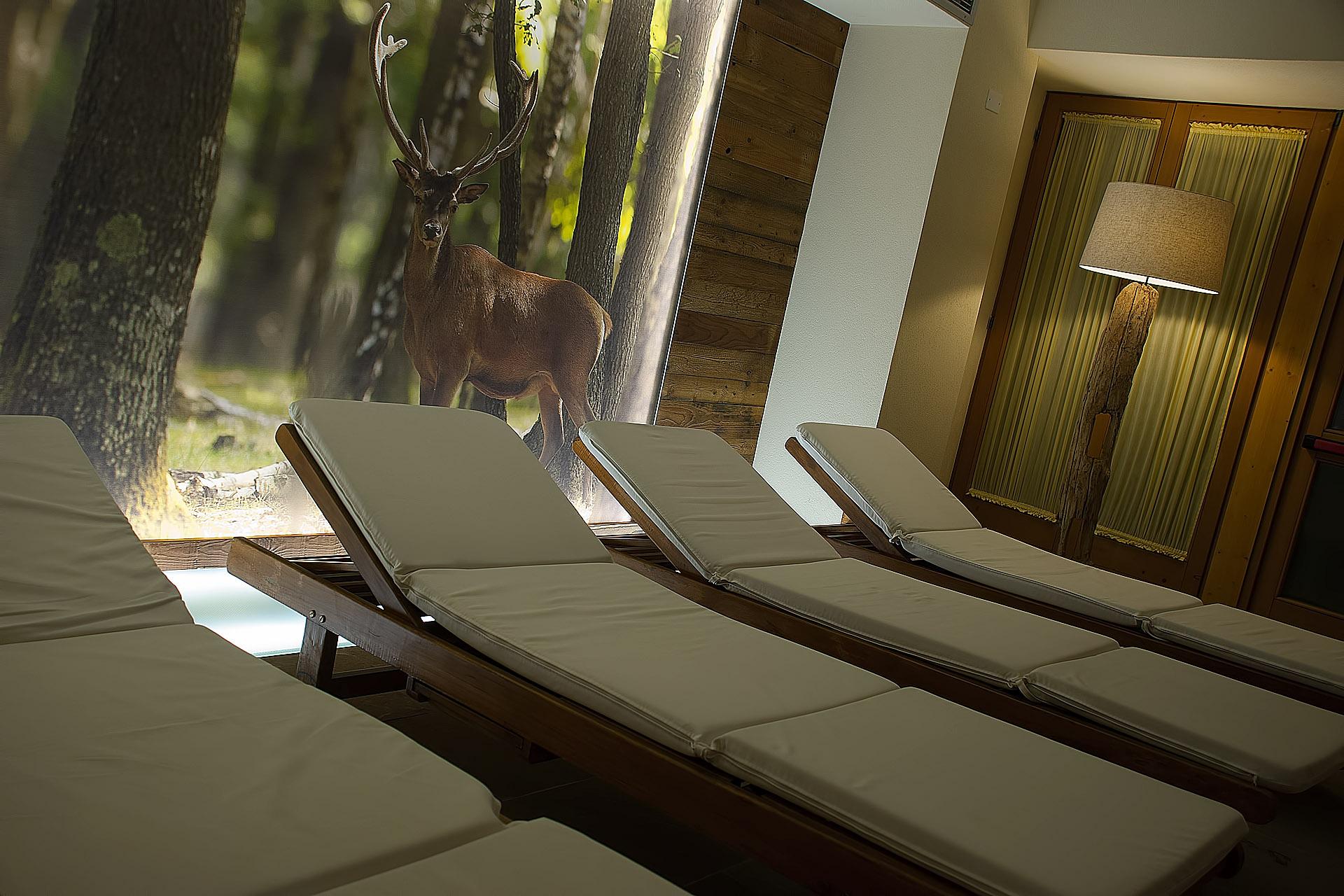 AREA RELAX<br /> HOTEL SALVADORI - MEZZANA
